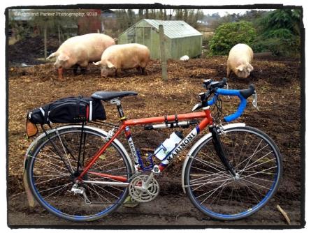 3-big-pigs