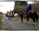 lochside-horses