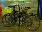 flower-basket-bikes